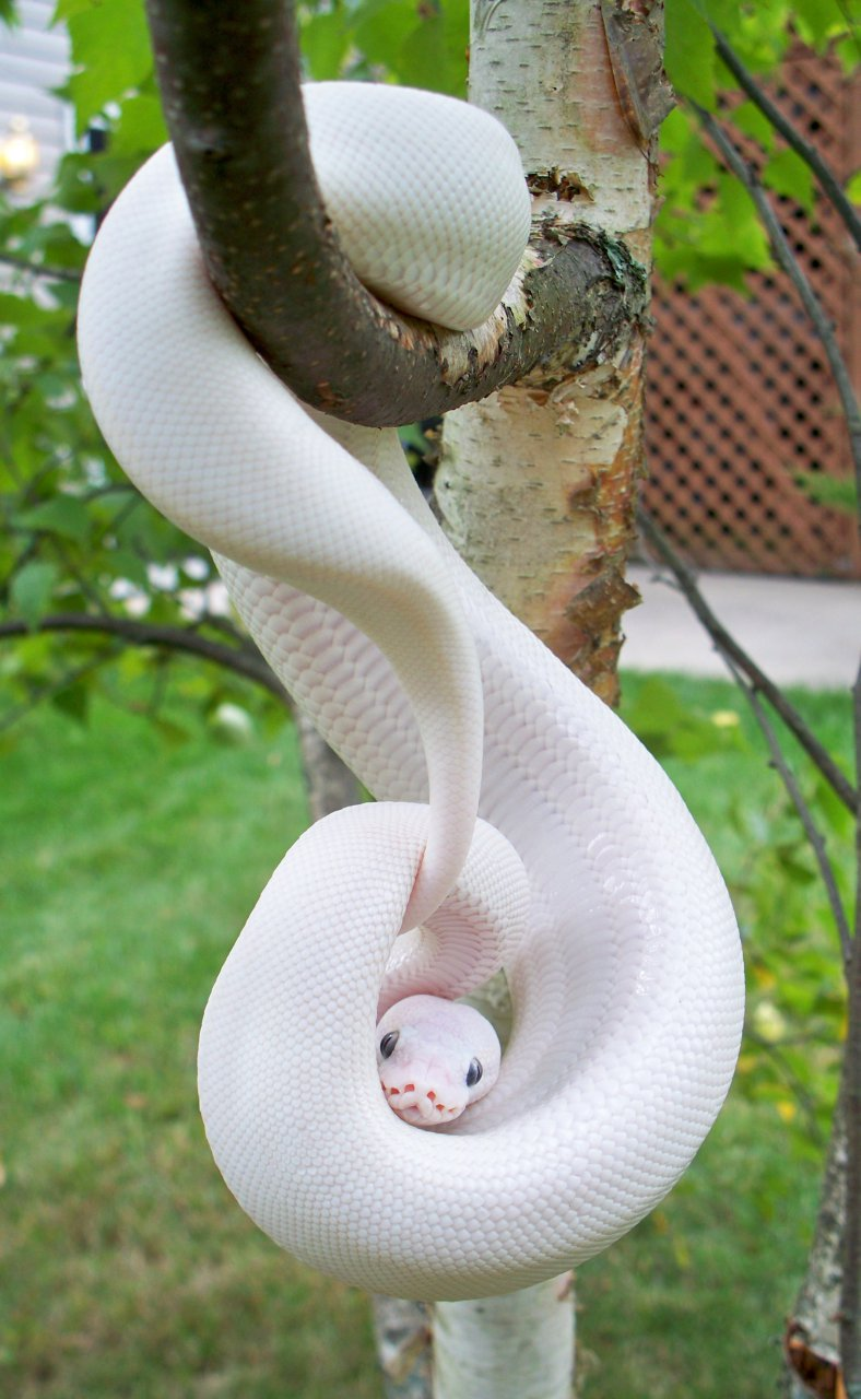 16 Animals That Prove Being Albino Is Beautiful