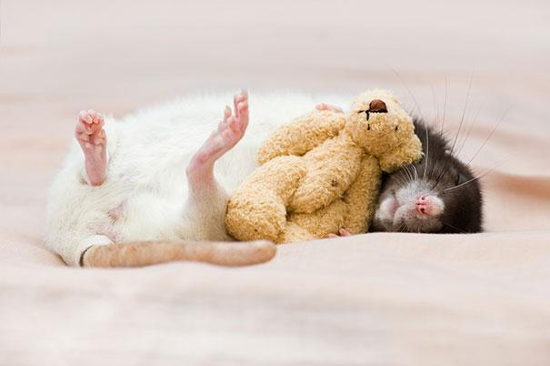 These Adorable Photos Might Cure Your Fear Of Rats
