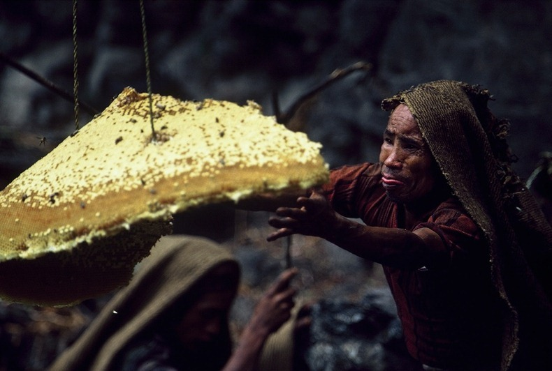 Nepalese Honey Collectors Climb Giant Cliffs Just To Live