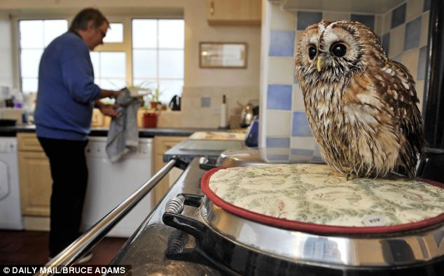 This Owl Was Left To Die By His Owner. That's Why I'm Shocked By What Happened.