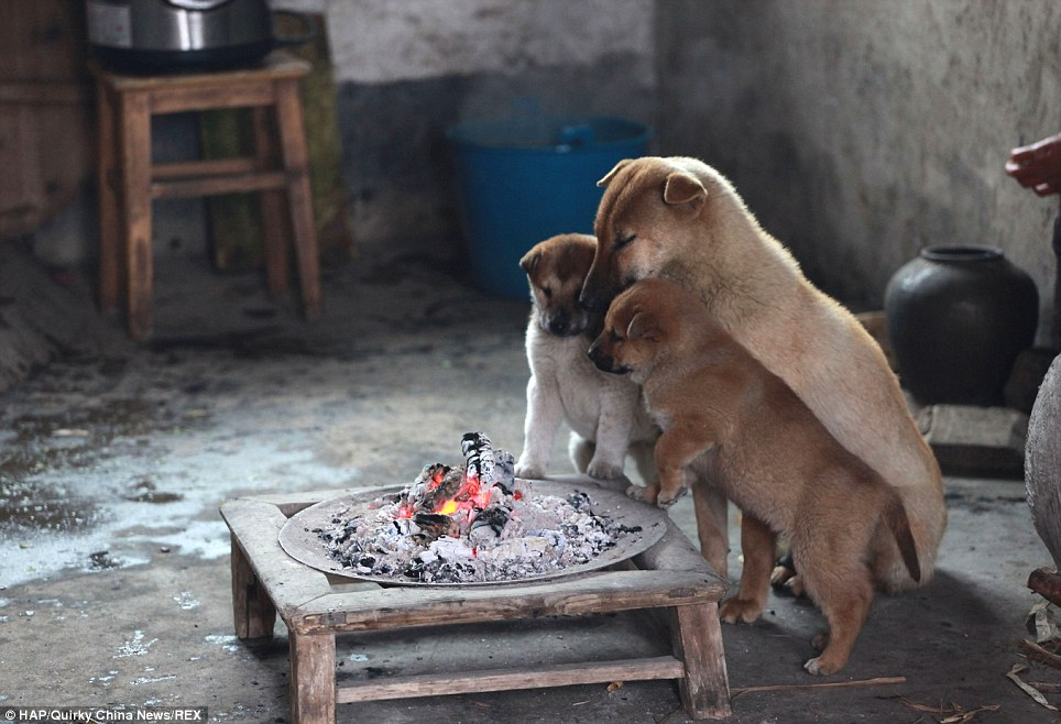 I Lost It When I Saw What These Stray Puppies Did. Even Though It's Brilliant.