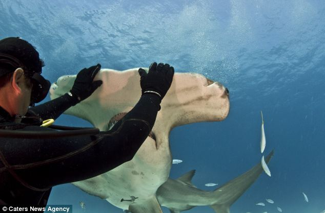 Diver And This Shark Come Face To Face. I'm Still Shocked At What Happens Next.