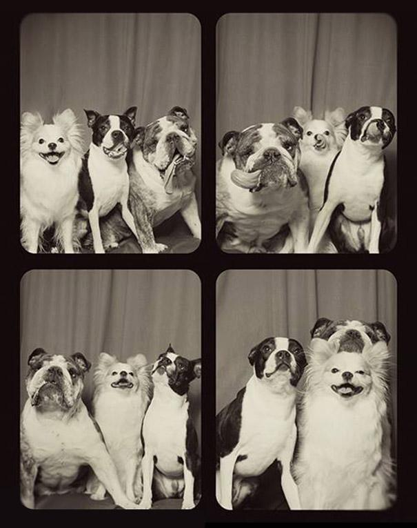 What Happens When You Put Dogs In A Photo Booth? This Ultimate Form Of Cuteness.