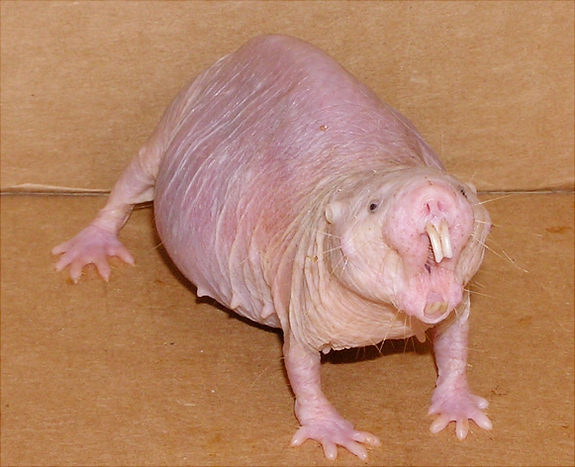 22 Animals That You Didn't Know Existed. Some Are Freaky Looking, Even Though I Want #11 As A Pet.