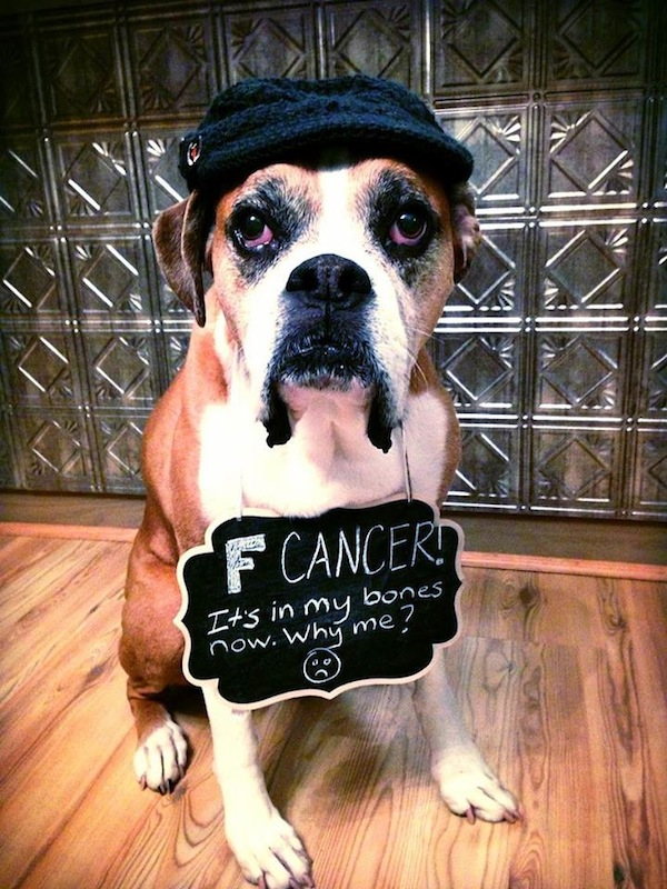 She Found Out Her Best Friend Had Cancer. What She Did About It Melted My Heart.
