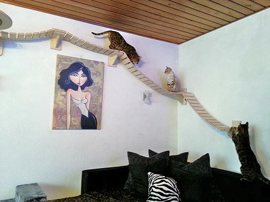 Here's A Unique Addition To Add To Your Home. And Become Your Cats Best Friend At The Same Time.