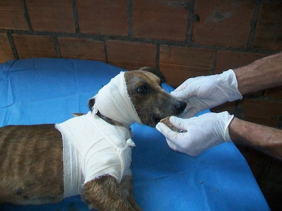 This Dog Was Literally Being Eaten Alive When He Was Found. This Made My Stomach Turn.