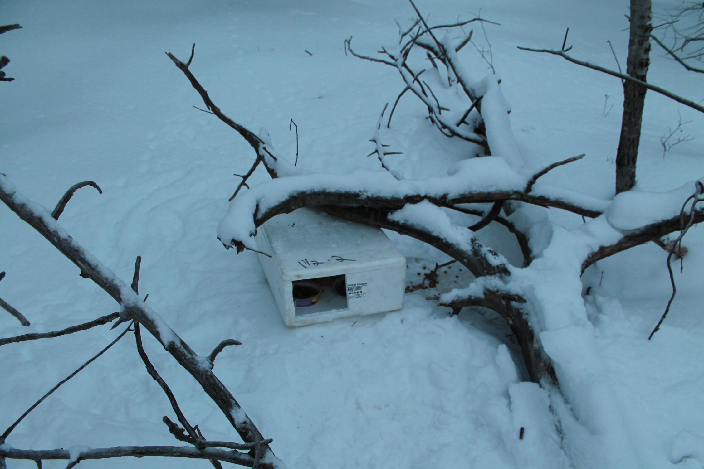 This Guy Found A Mysterious Box In The Snow. Nothing Could Have Prepared Him For What Was In It.
