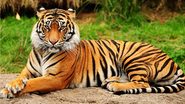 25 Terrifying Animals That Kill The Most Humans