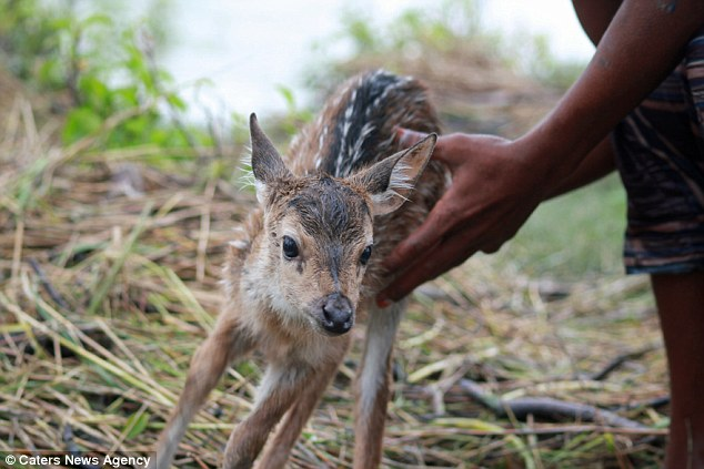When He Saw This Baby Deer Floating Down A River After A Flood, He Knew He Had To Do Something And QUICK.