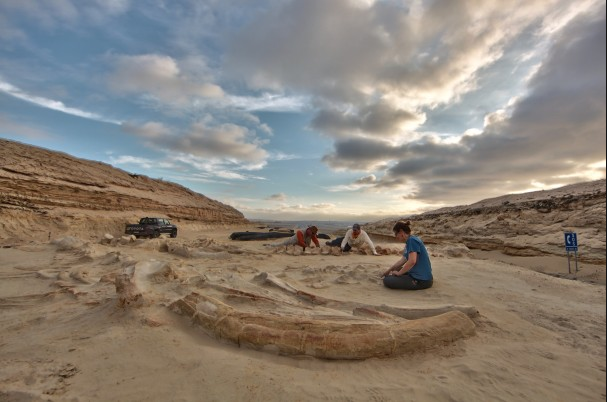 An Ancient Whale Graveyard Near Chile