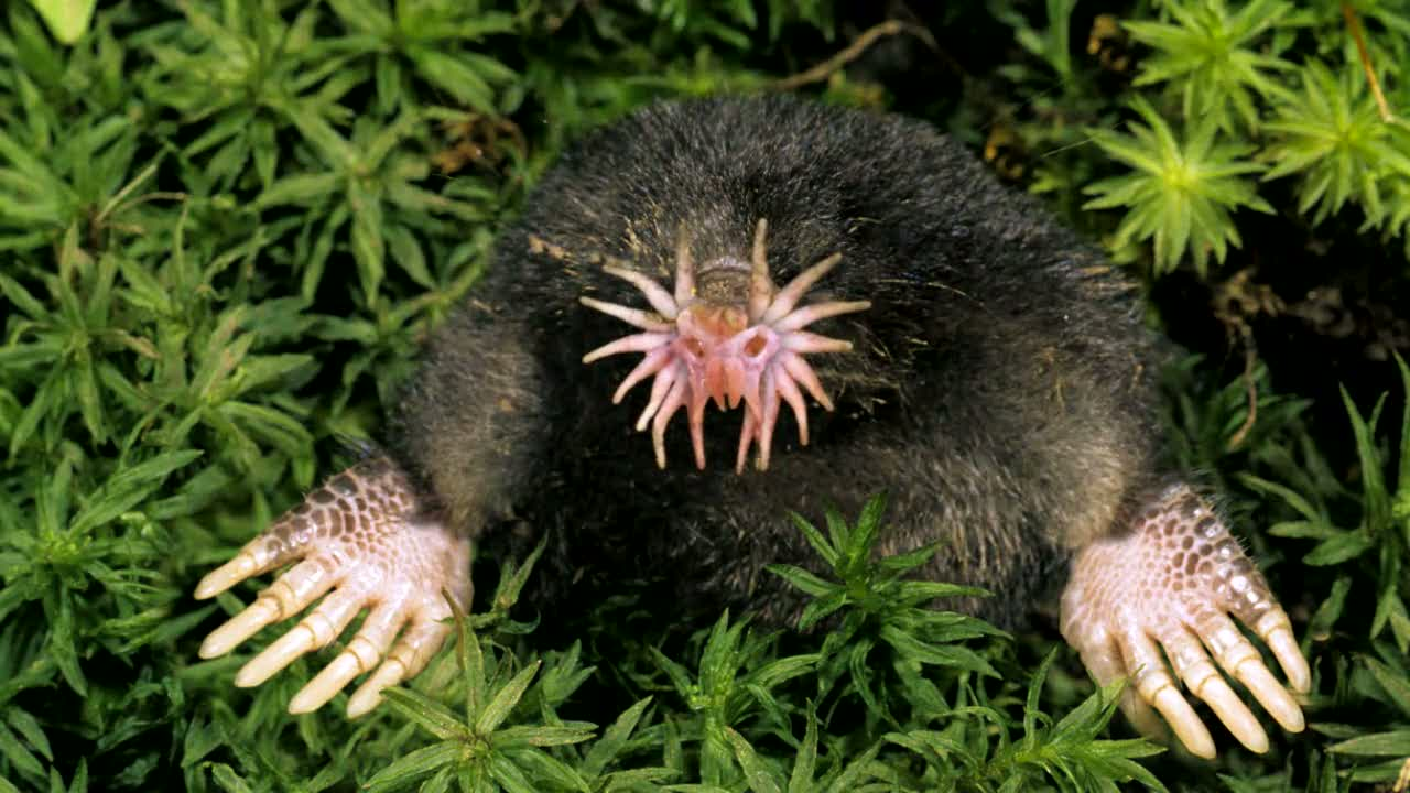 22 Freaky Animals That You Didn\'t Know Existed.