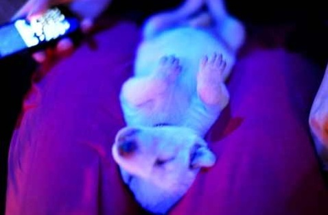 This Puppy Was Left To Die In A Mushroom Patch. What Happened Next Was Nothing Short Of A Miracle.