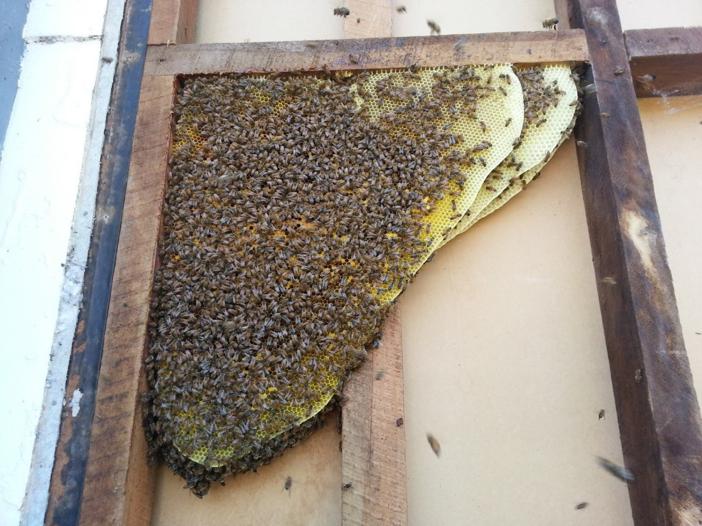 Bees Have Completely Taken over This Guys House. How He Fixes the Problem Is Brilliant.